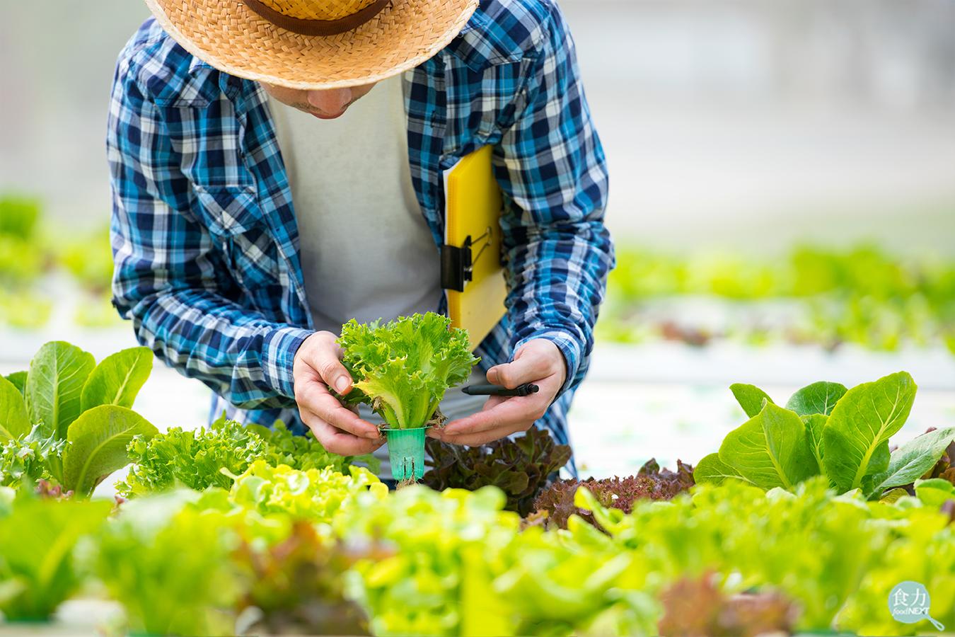 【TGA x 食力】有機友善耕作僅占全台1% 台灣永續農業還有一大段路要走